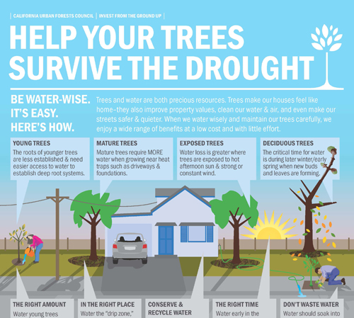 HelpYourTreesSurviveTheDrought
