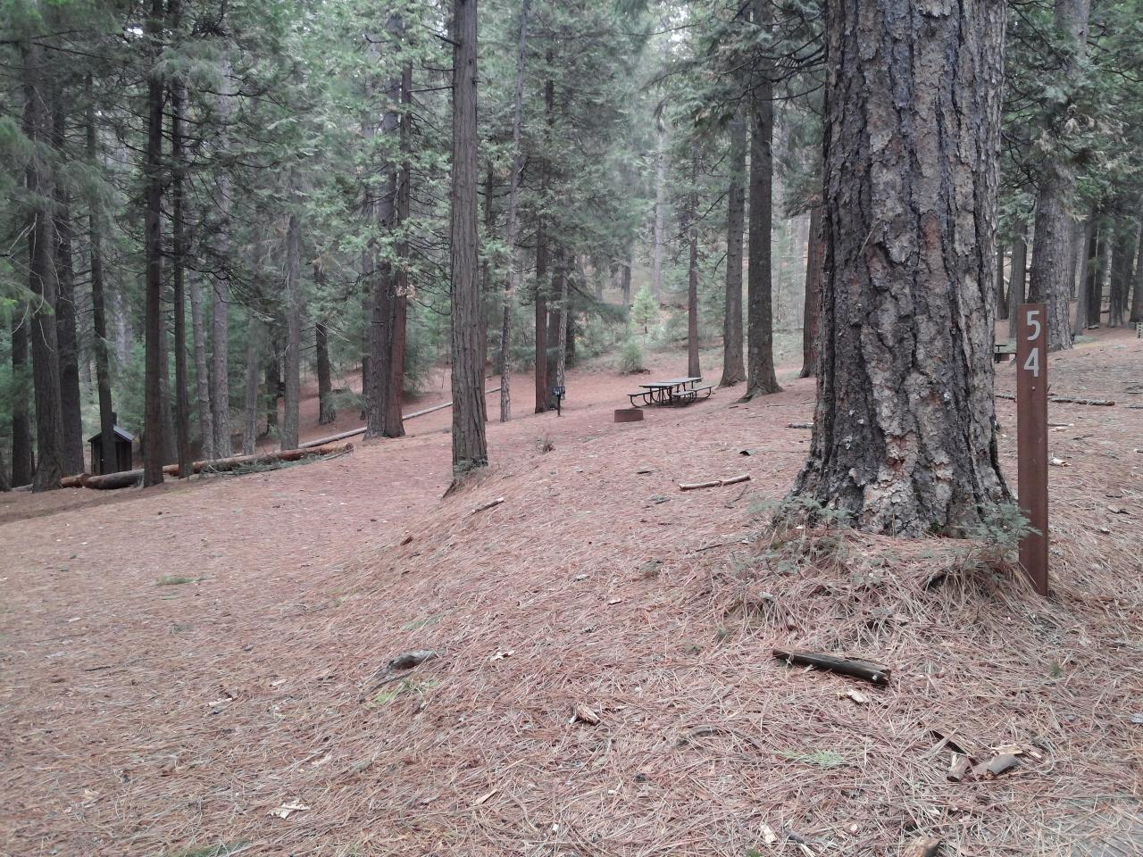 Sierra Spur site #54 - 3 vehicles or 24'MH - semi-shade, level, tight entrance due to trees