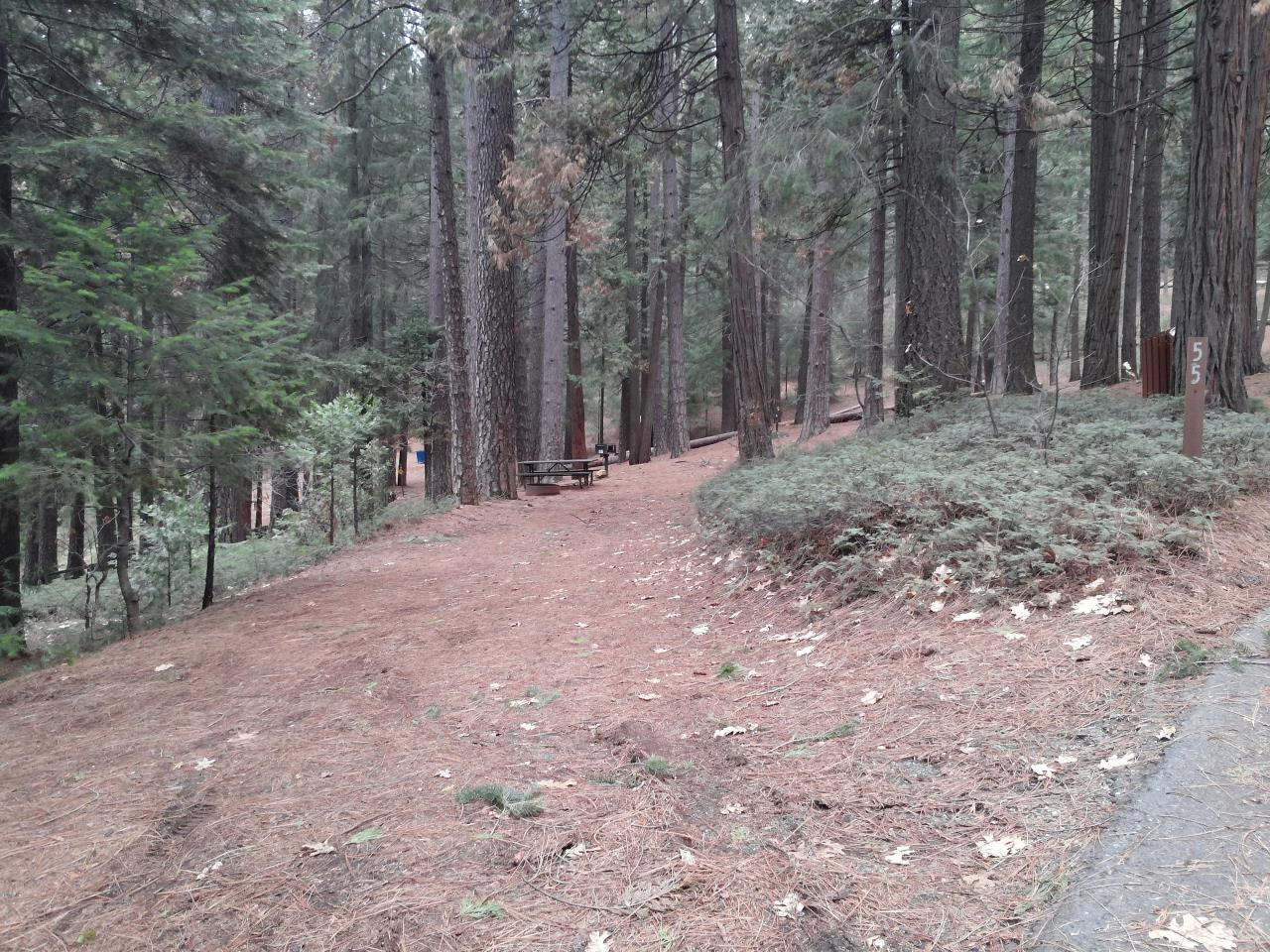 Sierra Spur site #55 - 3 vehicles or 24' MH- semi-shade, level, tight entrance due to trees