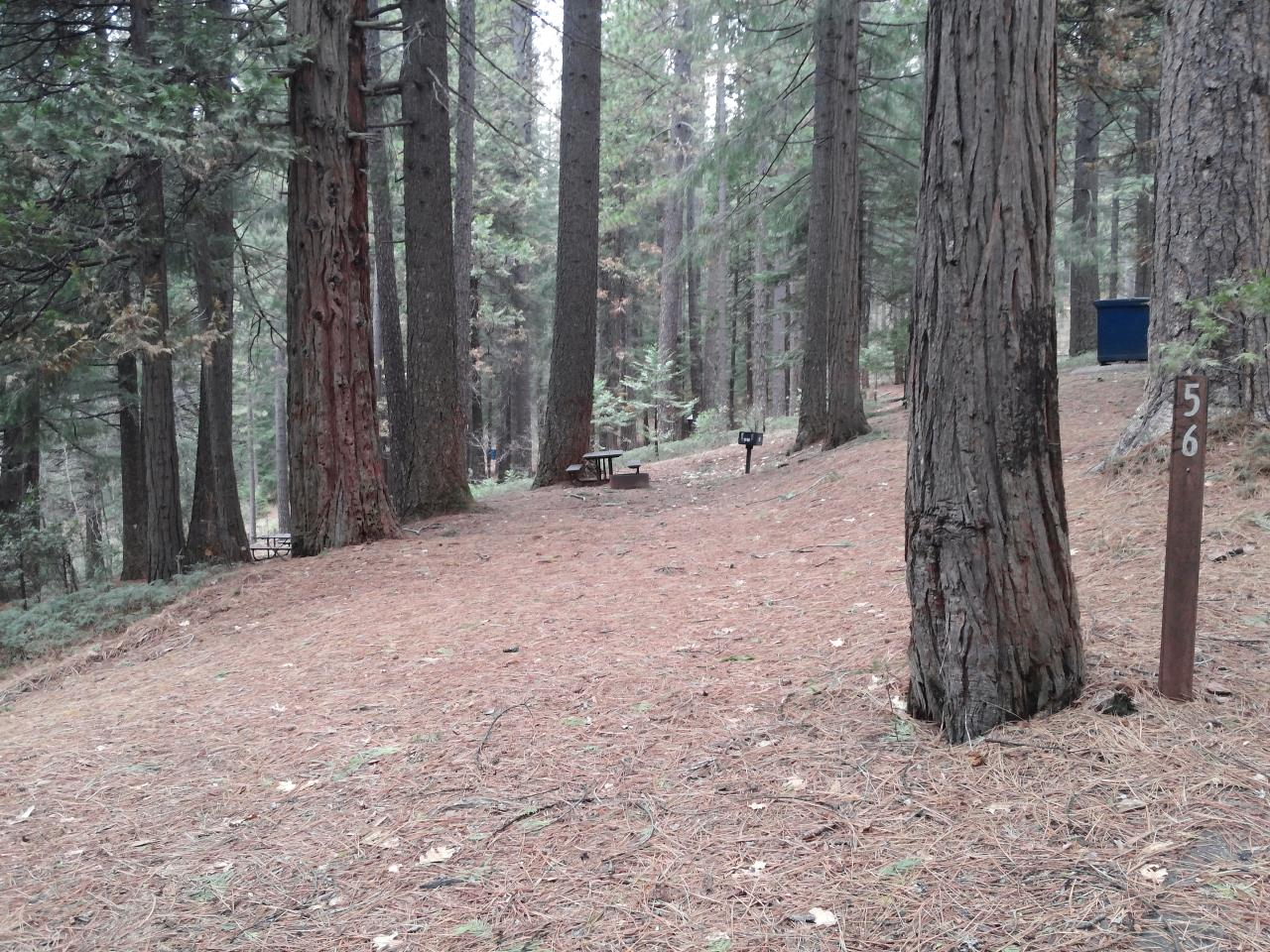 Sierra Spur site #56 - 2 vehicles, tent only - shade, level, super tight entrance