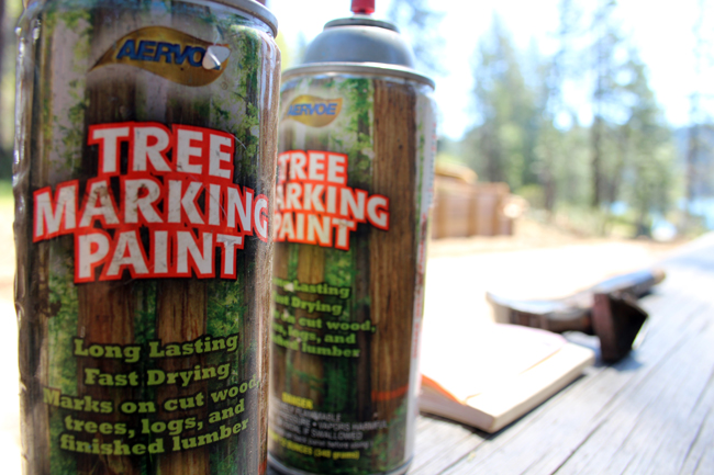 Tree Marking Paint Used For Logging Work at Sly Park Recreation Area Taken on 20170504 Beetle Infestation May 4 2017