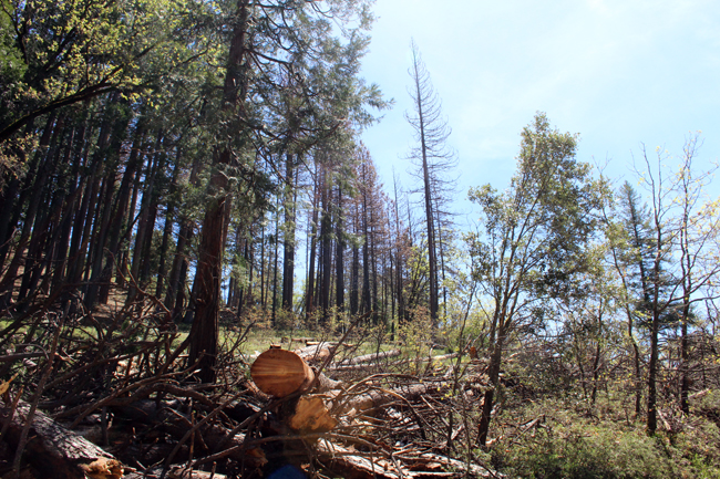Image of Log Machine Logging Work at Sly Park Recreation Area Taken on 20170504