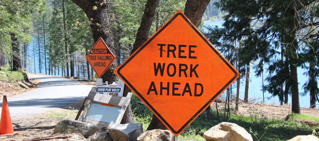 Caution Sign Tree Work Ahead